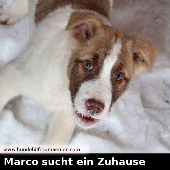 Marco Sucht Ein Zuhause Www Hundehilferumaenien Com Marco Er Wurde Mit Seinen Geschwistern Auf Einem Fabrikgel Hunde Vermittlung Tiere In Not Hundehilfe