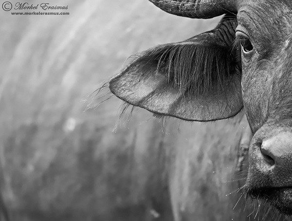 Photo of 10 Tips for Improving Your Wildlife Photography