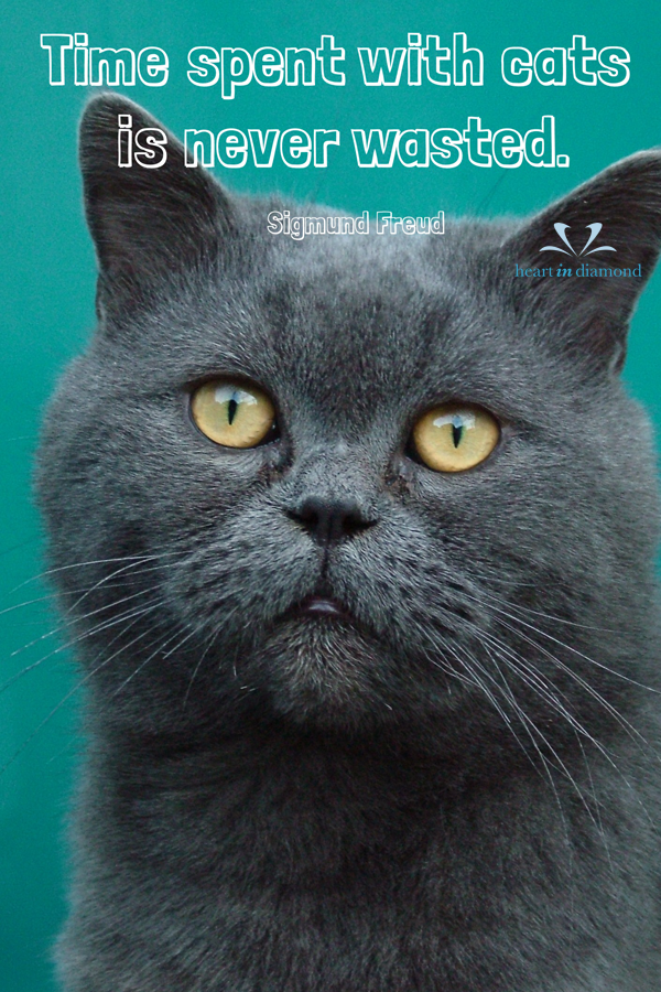Time Spent With Cats Is Never Wasted Sigmund Freud Quotes Animal Quotes Dog Quotes Cat S