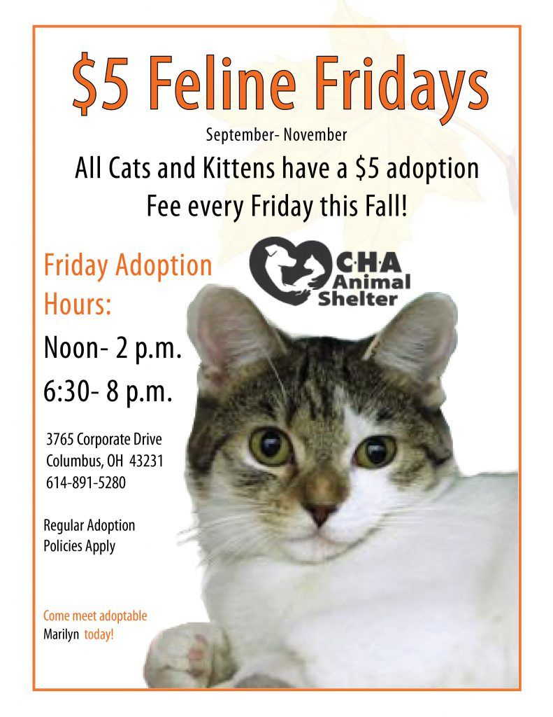 Home Cha Animal Shelter With Images Animal Shelter Animal