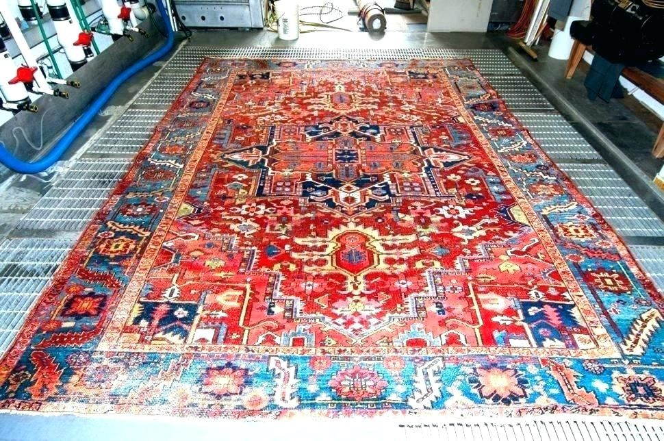 Fresh Area Rug Cleaning Photographs Good Or