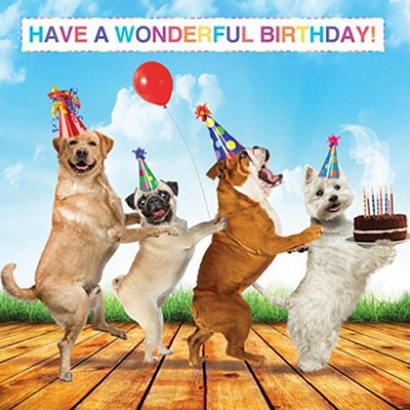 Birthday Wishes For Dog Puppy Pet Happy Birthday Dog Gif