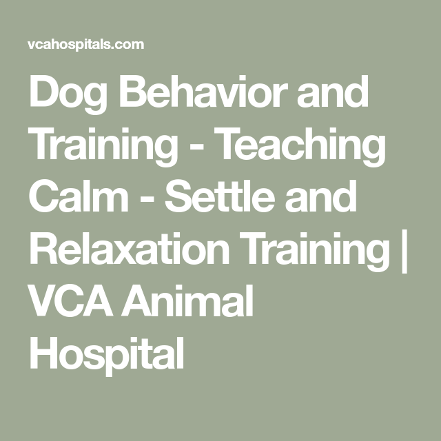 Dog Behavior and Training - Teaching Calm - Settle and