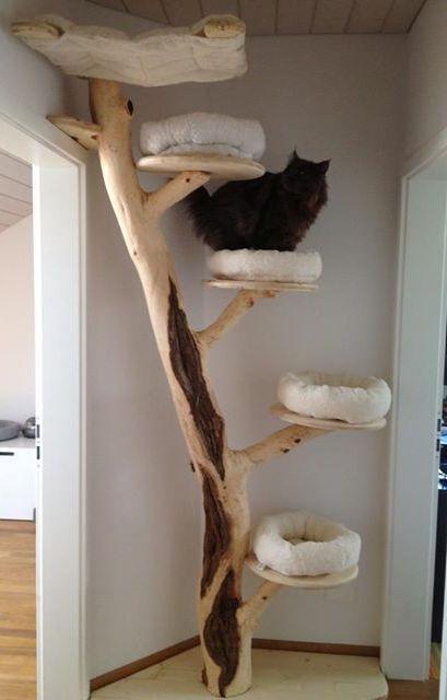 Biggest House Ever >> Pin auf Katzenspielzeug