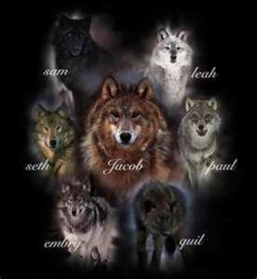 The Wolf pack   Twilig...