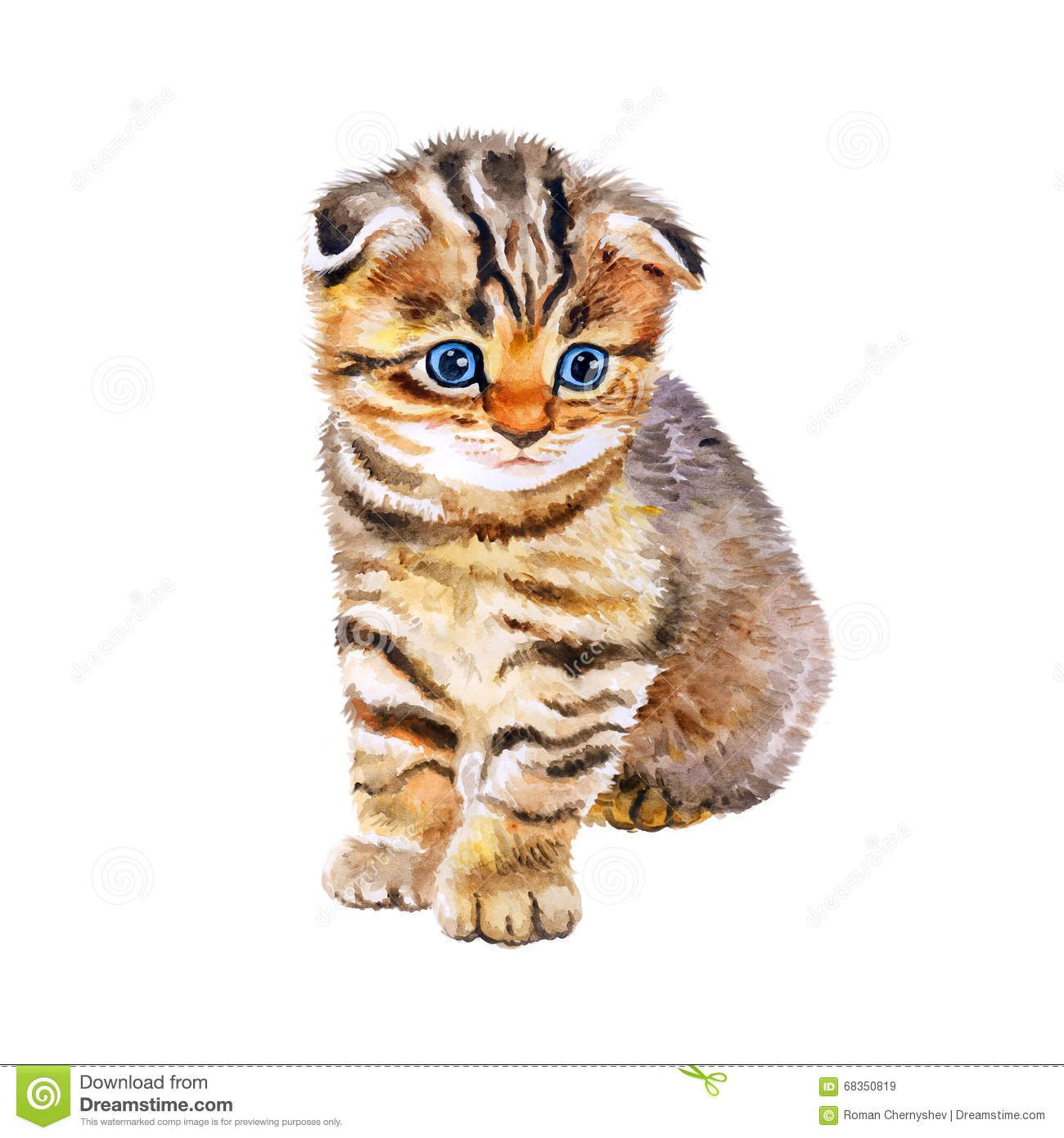 Watercolor Portrait Of British Scottish Fold Kitten With Odd Eyes