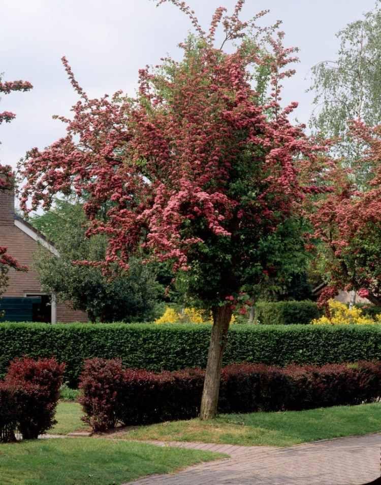 arbre pour petit jardin les varietes a