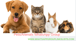 Join Pets Animals Whatsapp Group Links List Hello Everyone Welcome To Whatsapp Group Links Today Am Back With Pet Care Dogs Animals Elderly Dog Care