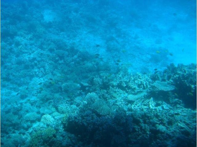 Sari Express Travel » Paradise Island Snorkeling Trip: Full-Day from Hurghada