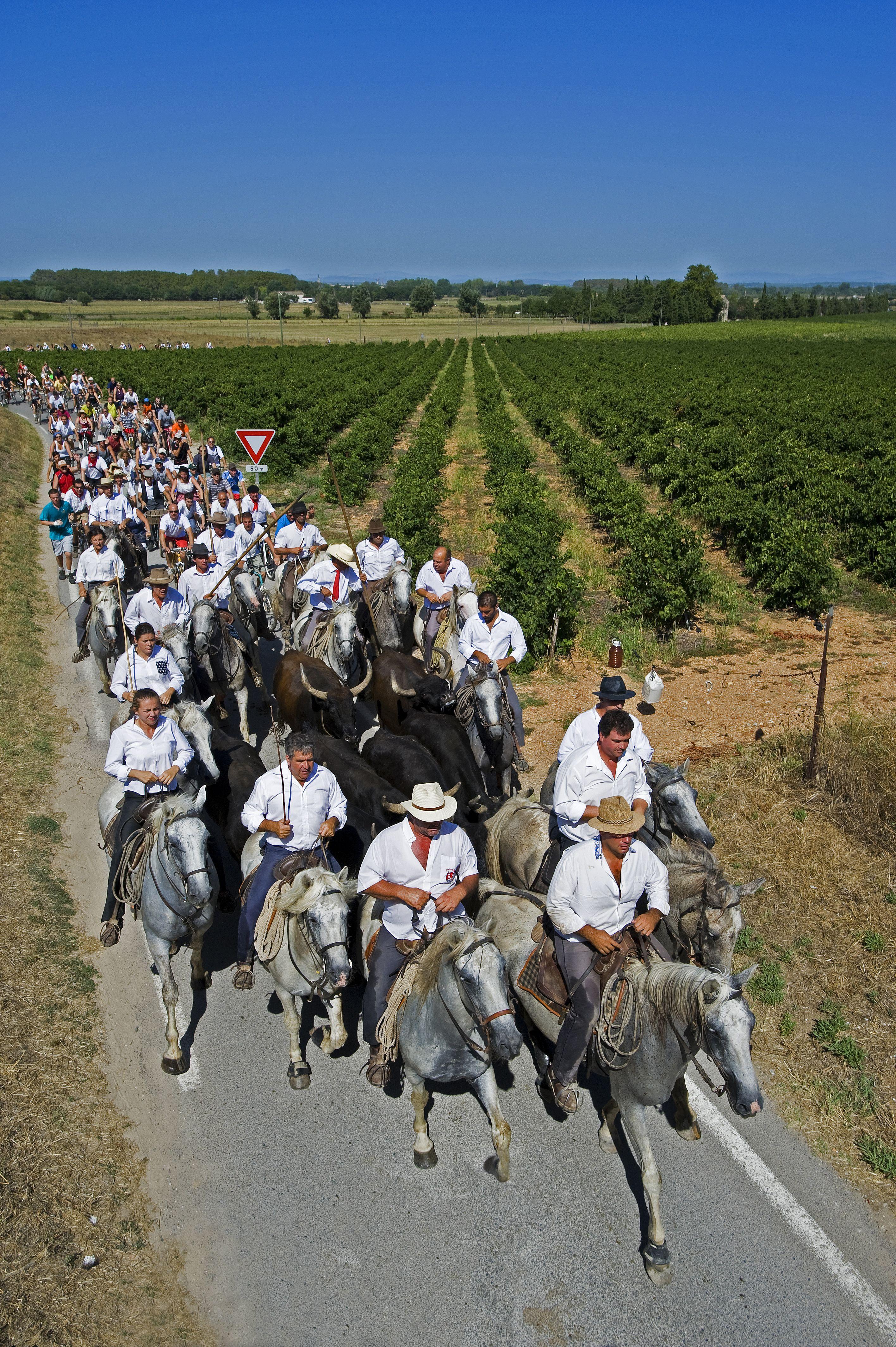 Abrivado A Cheval En Camargue Camargue Gardian Chevaldaventure Camargue Camargue Cheval Randonnee Equestre