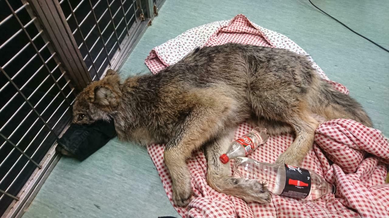 Animal saved from icy Estonian river turns out to be a