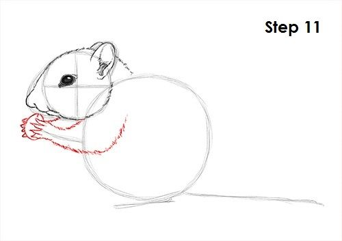 Line Drawing Rat : Draw chipmunk 11.jpg line drawings pinterest chipmunks