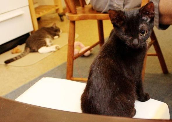 Iris [4]  kitten