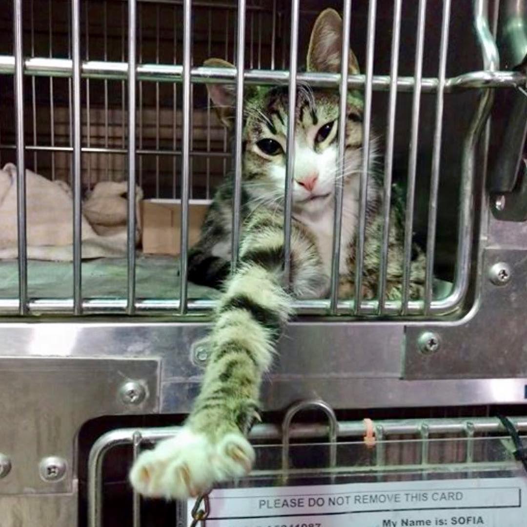 "Baldwin Park Shelter Cats on Instagram ""💖🐱💥Save LOGAN"