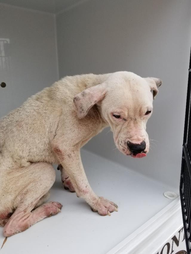 Tierheim adoptiert ein Haustier; Hunde