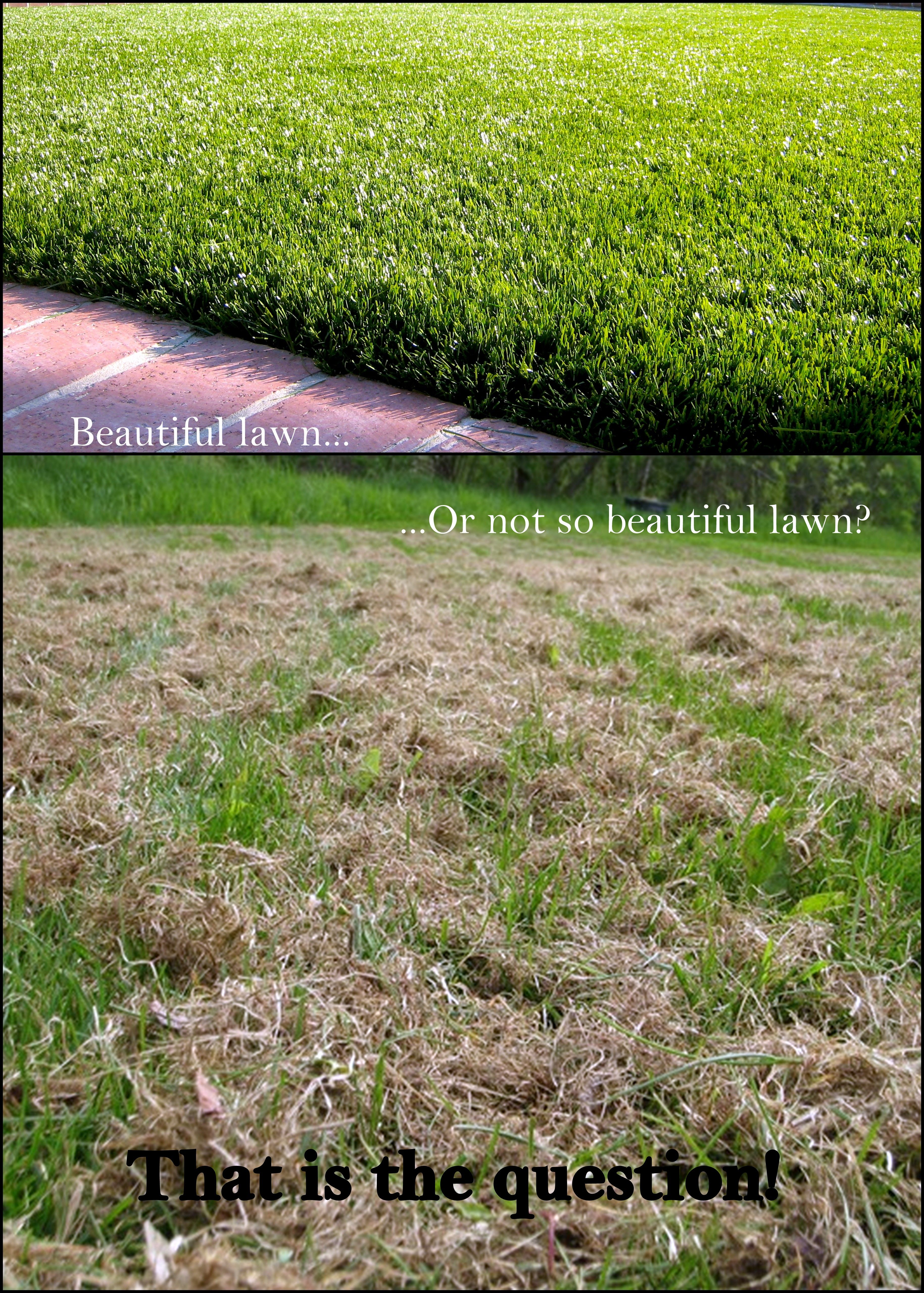how long does it take grass seed to germinate in cold weather