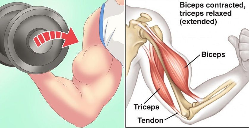 how to develop biceps muscles