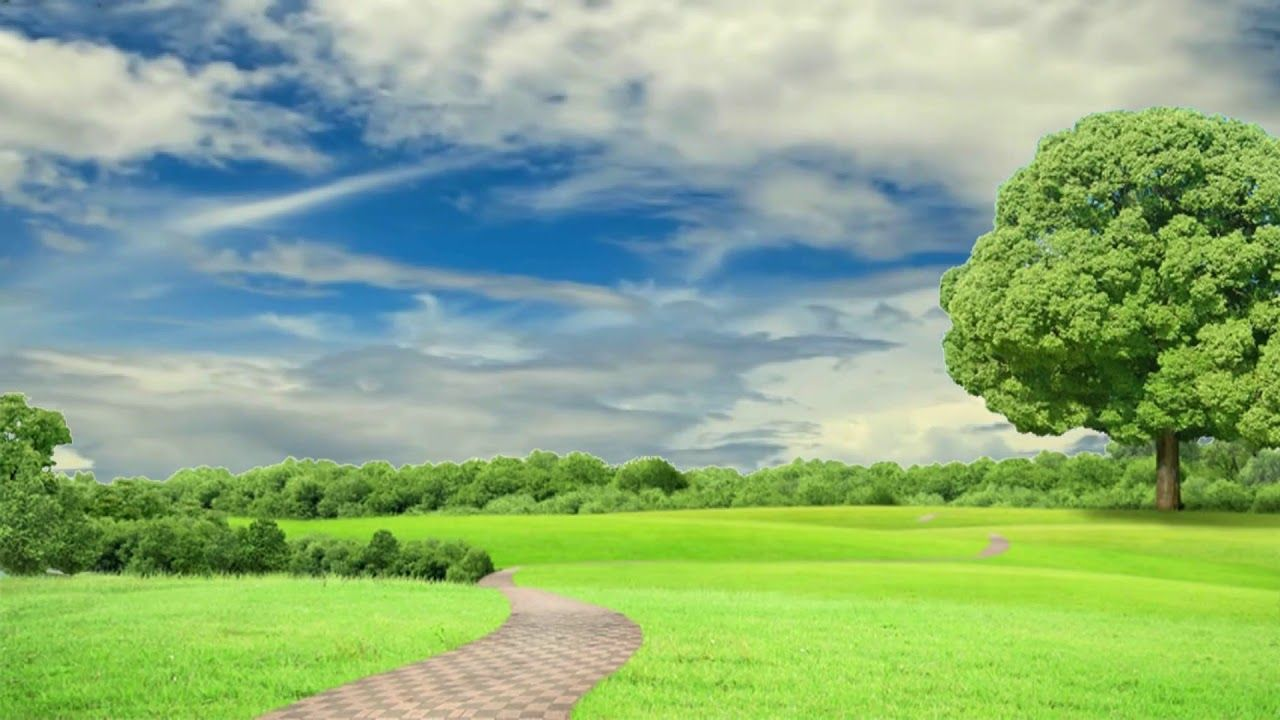 HD 1080p Nature Background Scenery Video, Royalty free