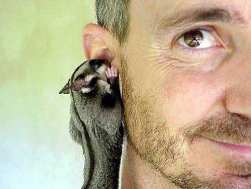 ...è un segreto...    (ZooFitoSfera животные и растения - G+)
