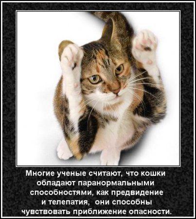 Забавные и интересные факты о кошках  Интересно  cats
