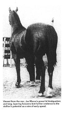 Joe Moore(1927)Little Joe- Delia Moore I By Old DJ. 5x5 To Old Billy. A Leading Broodmare Sire Of ROM Race Qualifiers.