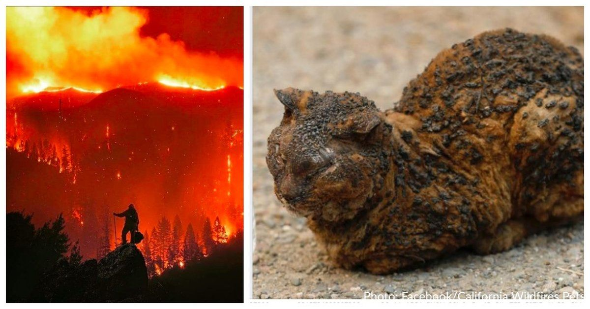 Badly Burned Cat Rescued From California Wildfire Has Passed Away