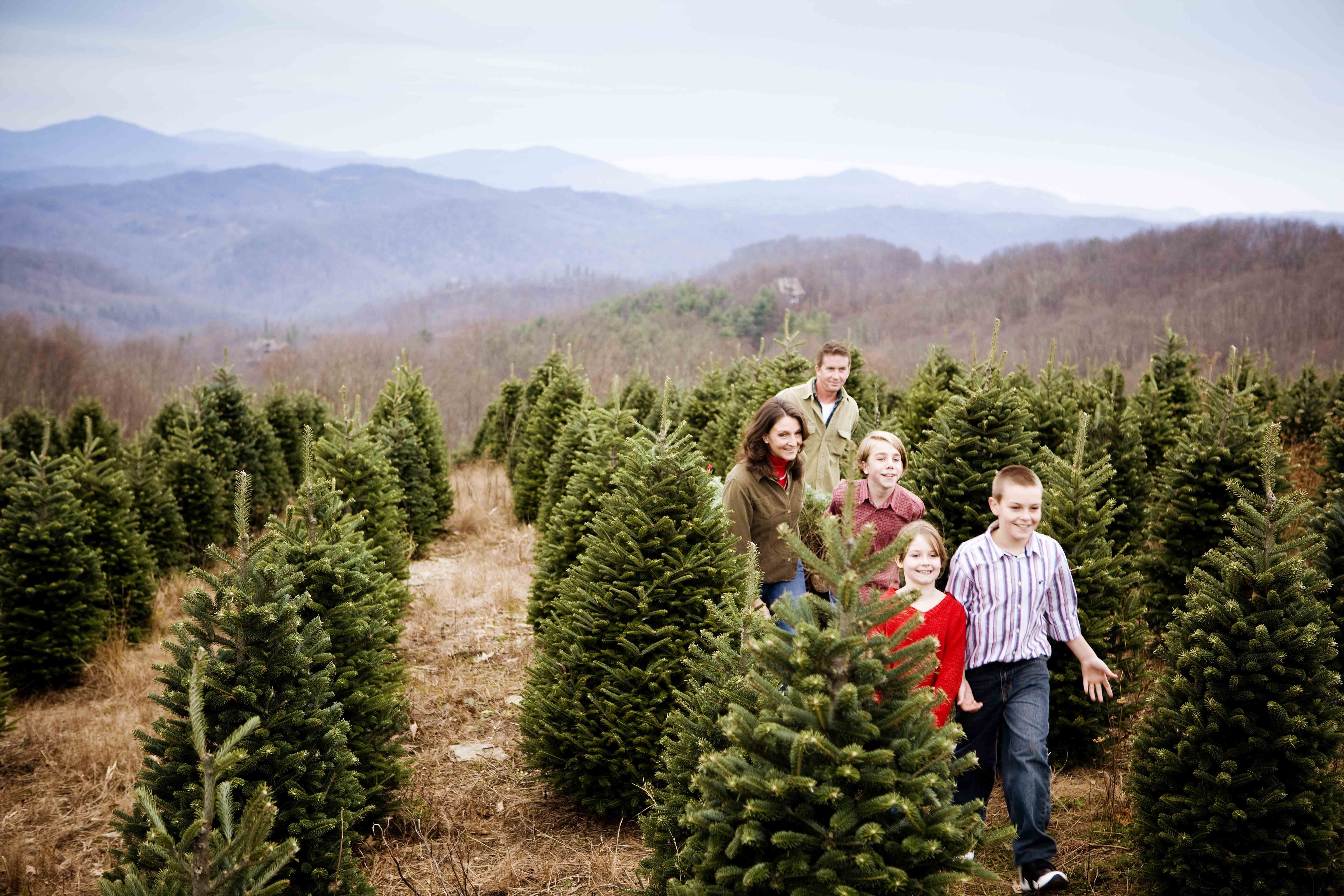 Let Us Show You How To Hunt For The Perfect North Carolina Grown Christmas Tree Perfect North North Carolina Mountains North Carolina
