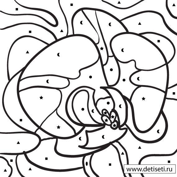 Раскраски по цифрам: Орхидея