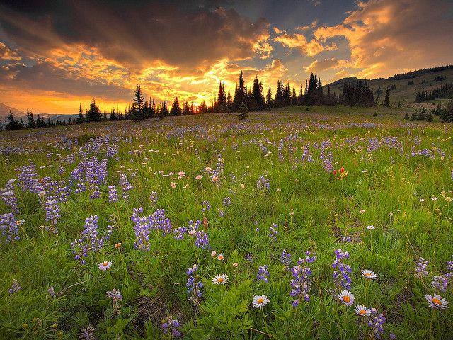 Vse Razmery Pejzazh Flickr Photo Sharing Sunset Landscape Landscape Photography Sunset Wallpaper