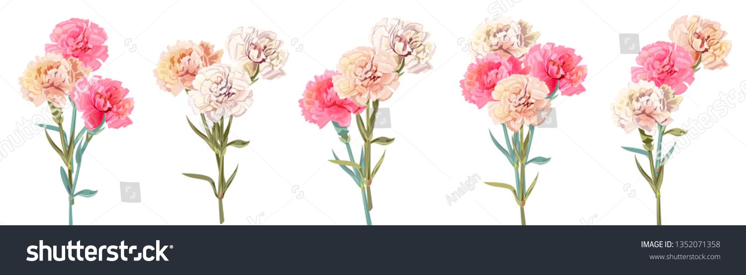 Watercolor Red Flower Carnation Download From Over 64 Million