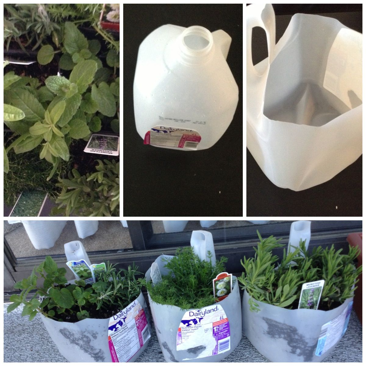 Diy Recycled Milk Jugs Into Planters Recycled Projects Diy Planters Diy