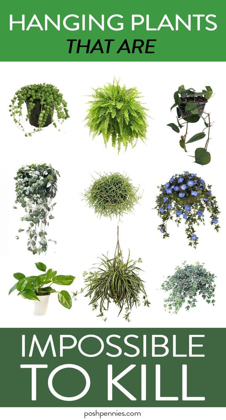 The absolute best list of practically immortal indoor hanging plants that you cant kill no matter how hard you try
