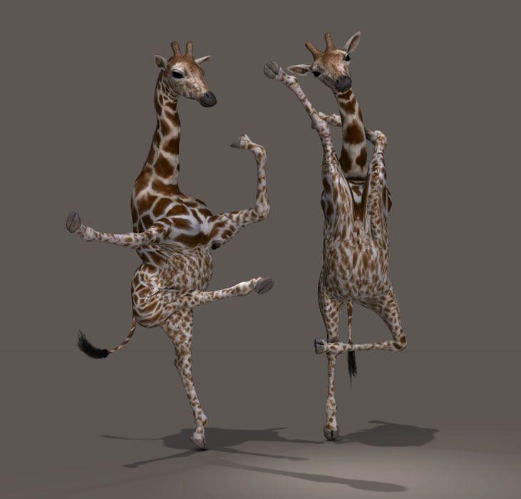 Картинки анимации танцующие животные, скайпе отправить открытку