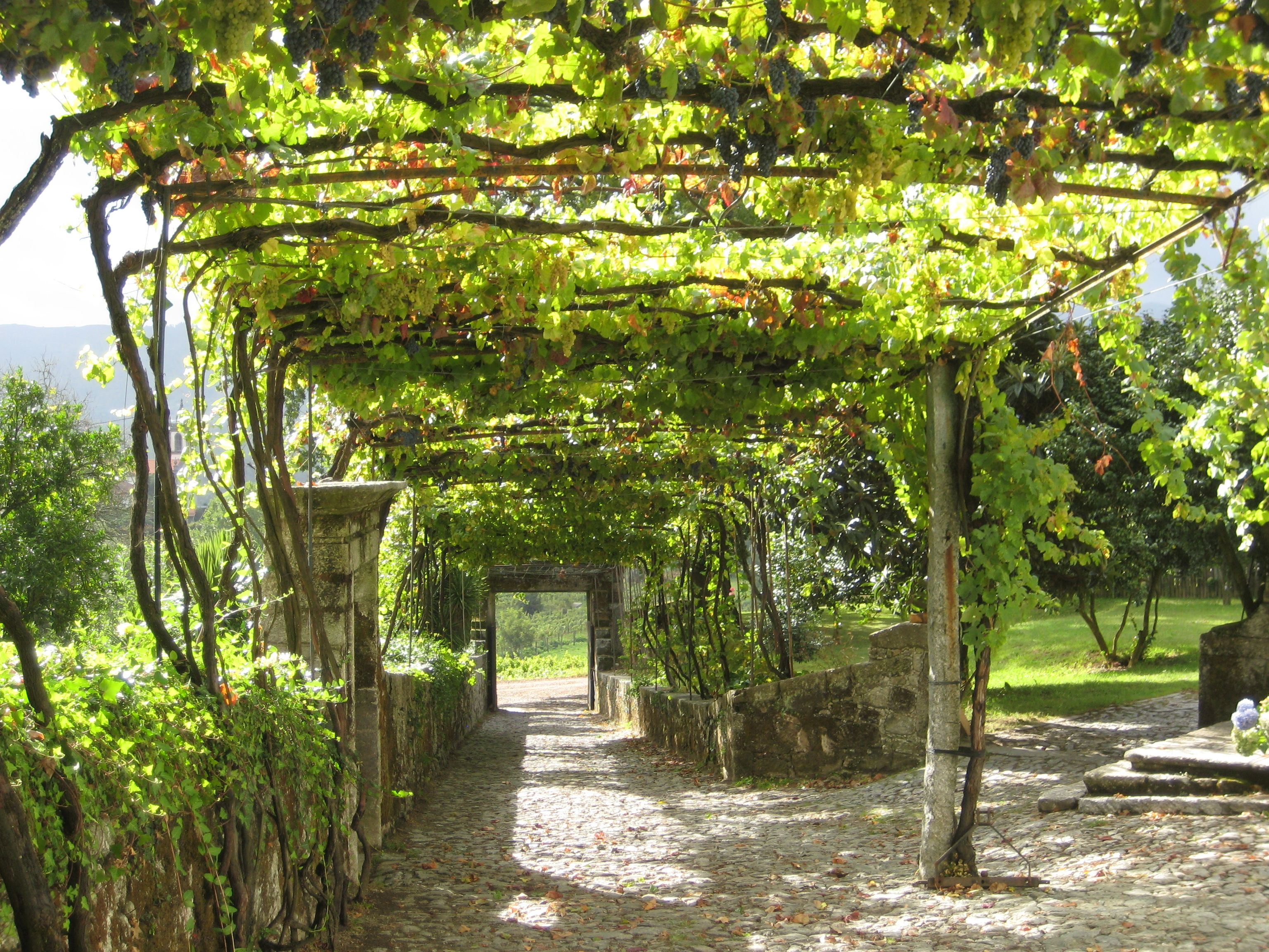 Grape Arbor Plans  Grape Arbor With Granite Roads And Walls Winery  Equipment The