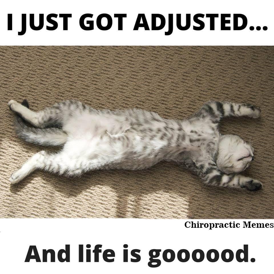 "Experience the ""gooooood"" life! Carpet cleaning pet"