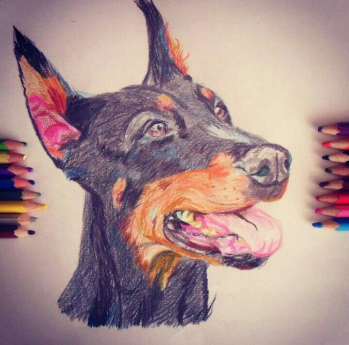 Dibujo De Perro Doberman Perro Animal Doberman Dibujo Dibujos