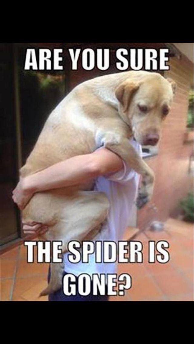 Dies ist so Sierra, wenn sie eine Spinne sieht #funnydogs