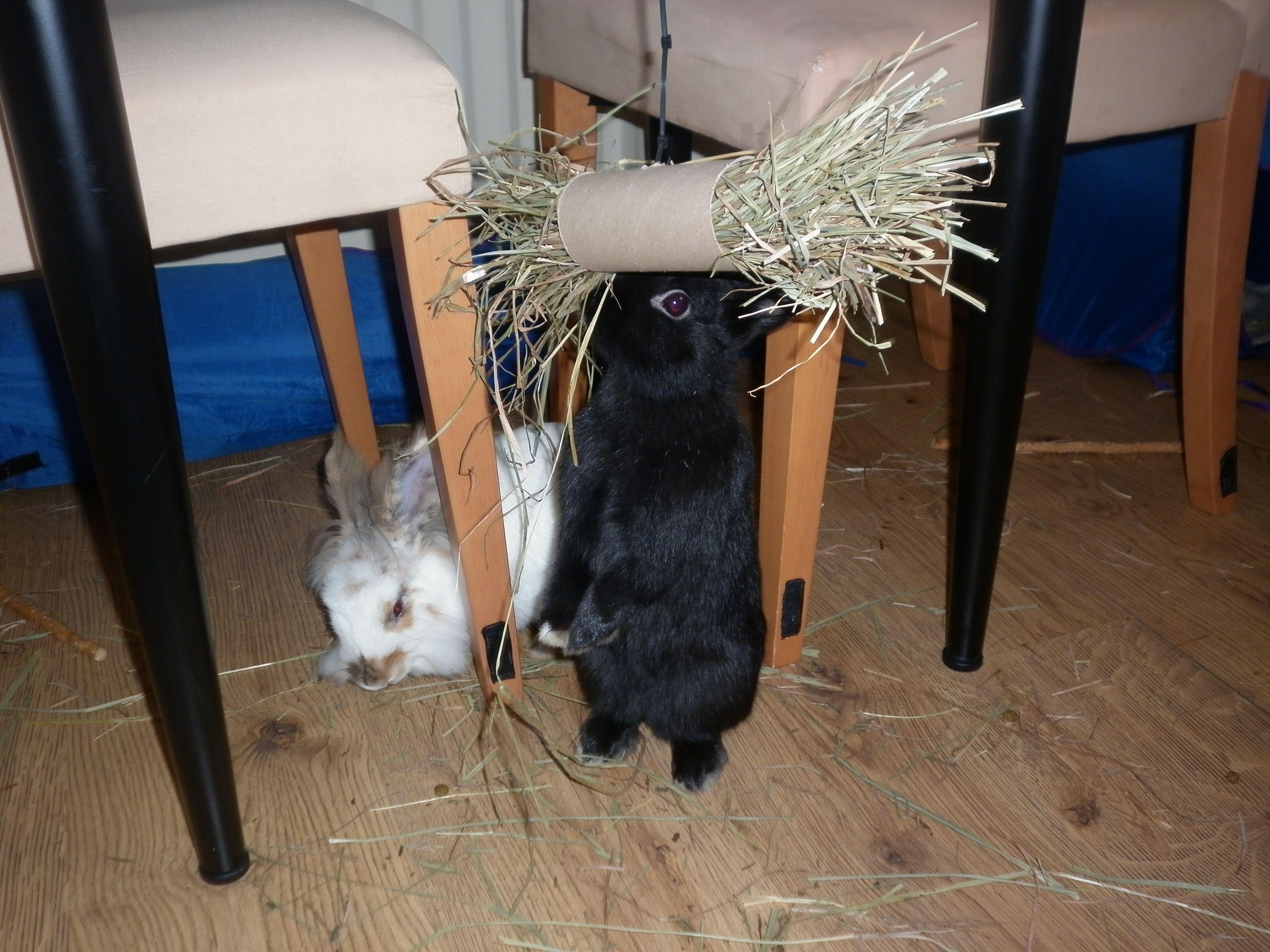 Homemade toys Rabbits United Forum Kanin