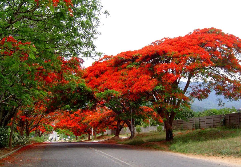 Image result for zimbabwe's autumn