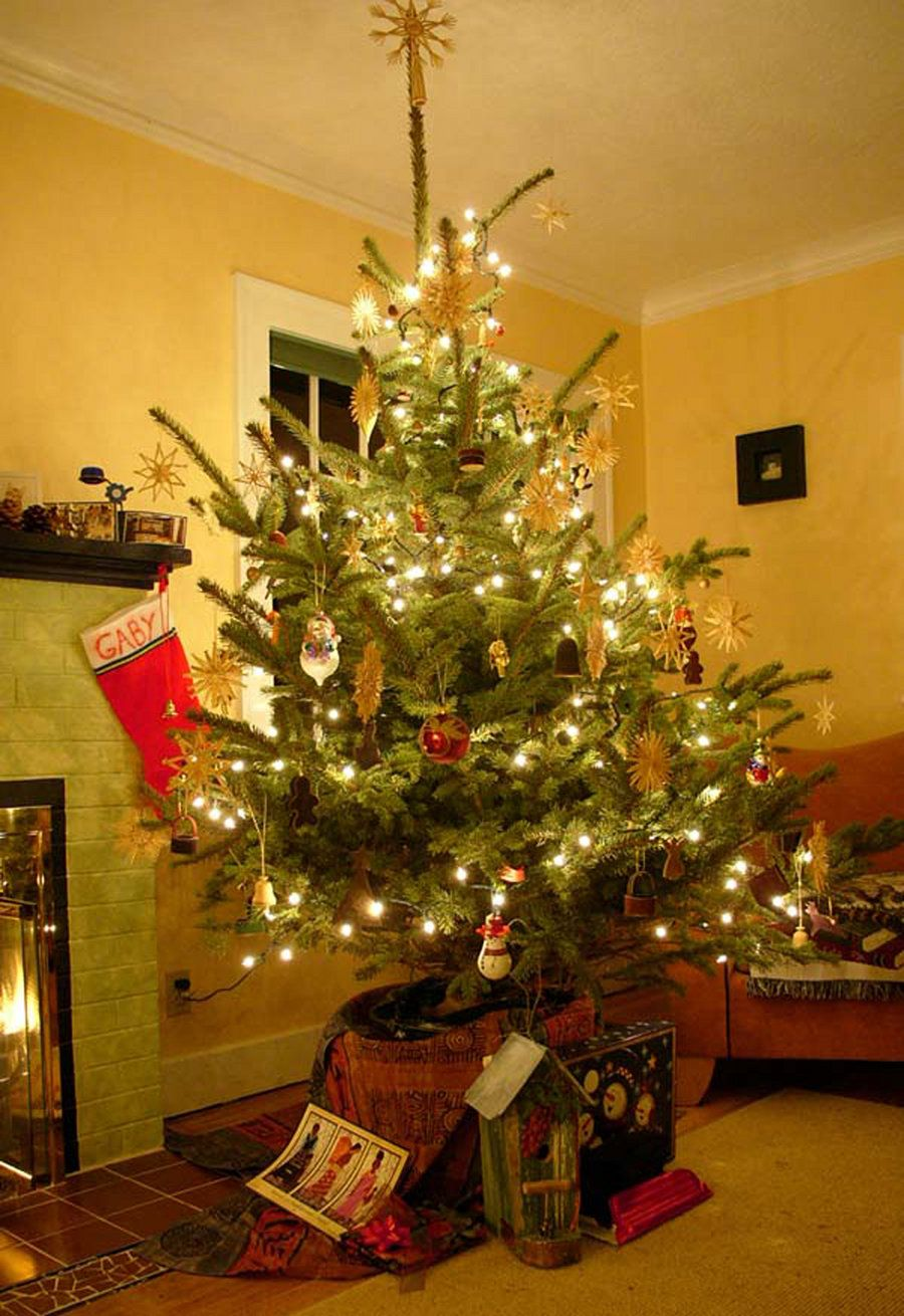 this douglas fir is transformed into a decorated live potted christmas tree - Rent A Christmas Tree