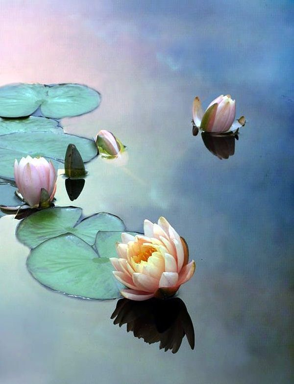 40 Peaceful Lotus Flower Painting Ideas
