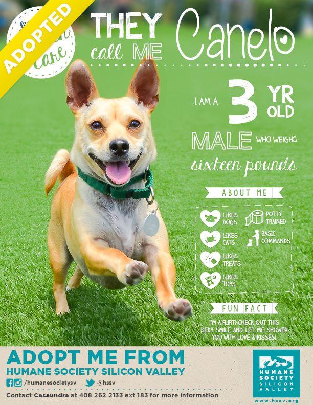 Canelo's been adopted! Woohoo! Dog adoption photos