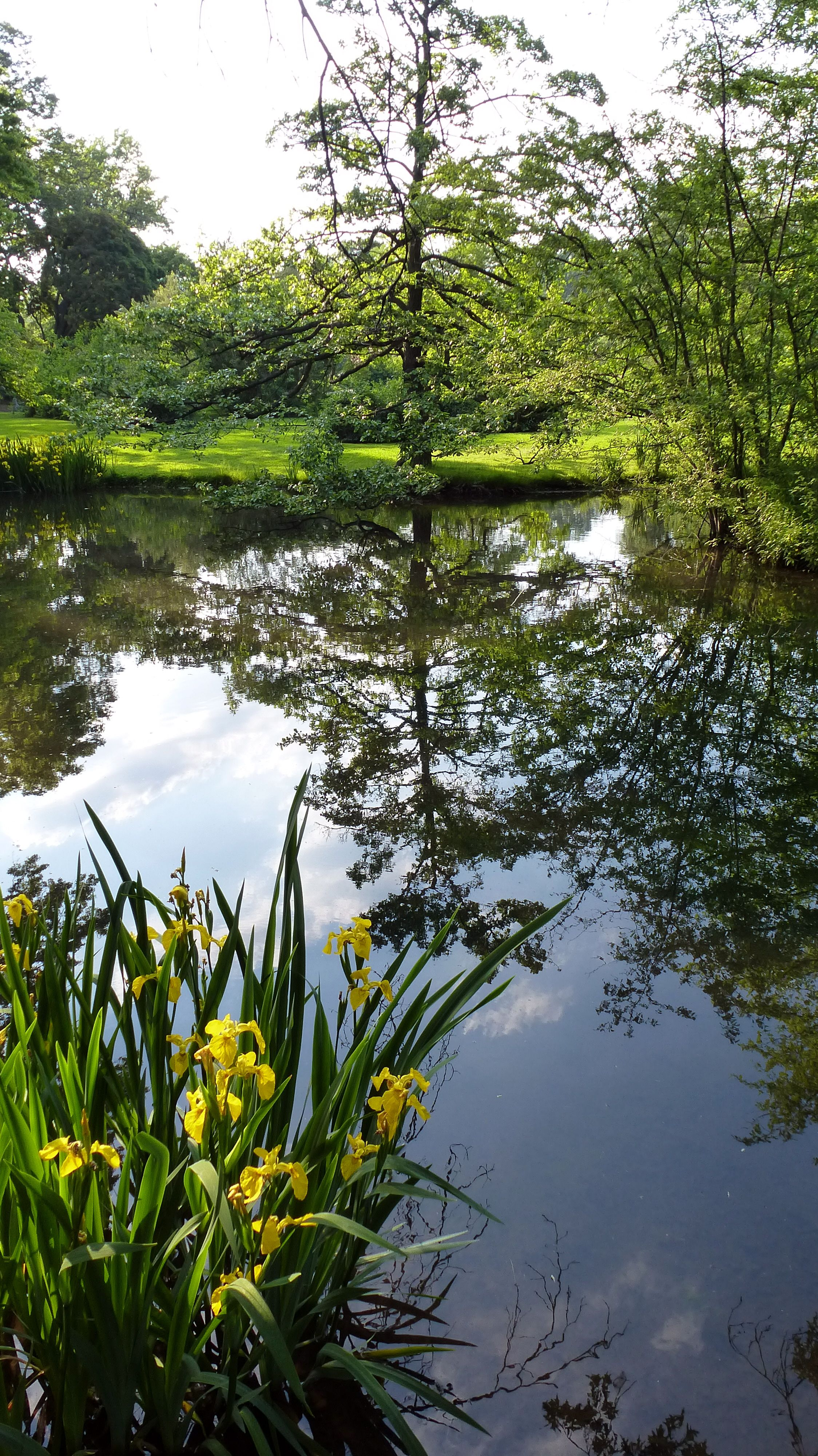 Beautiful healthy and blue water can be achieved with for Garden pond life