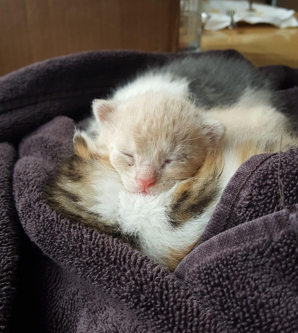 Family Heard Kitten Cries from Bush and Couldn't Believe