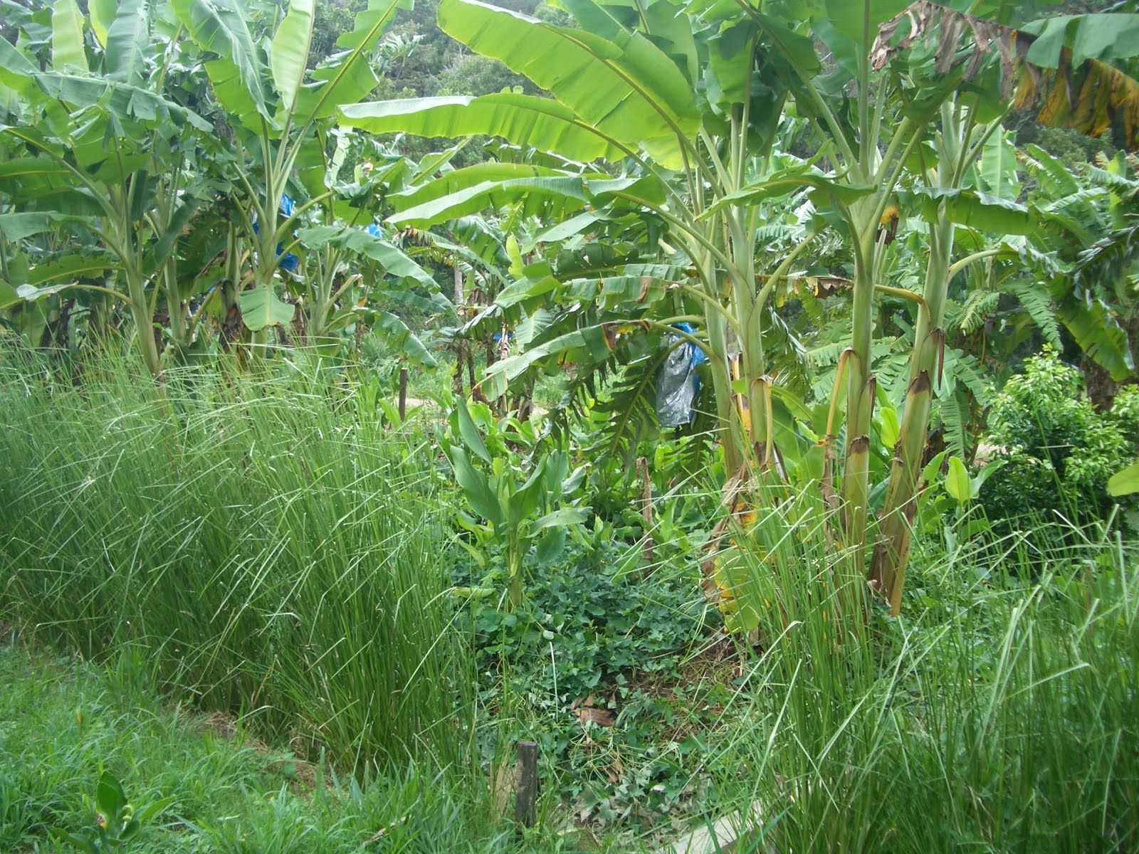Establishing a permaculture food forest by using biological resources, to increase self reliance.