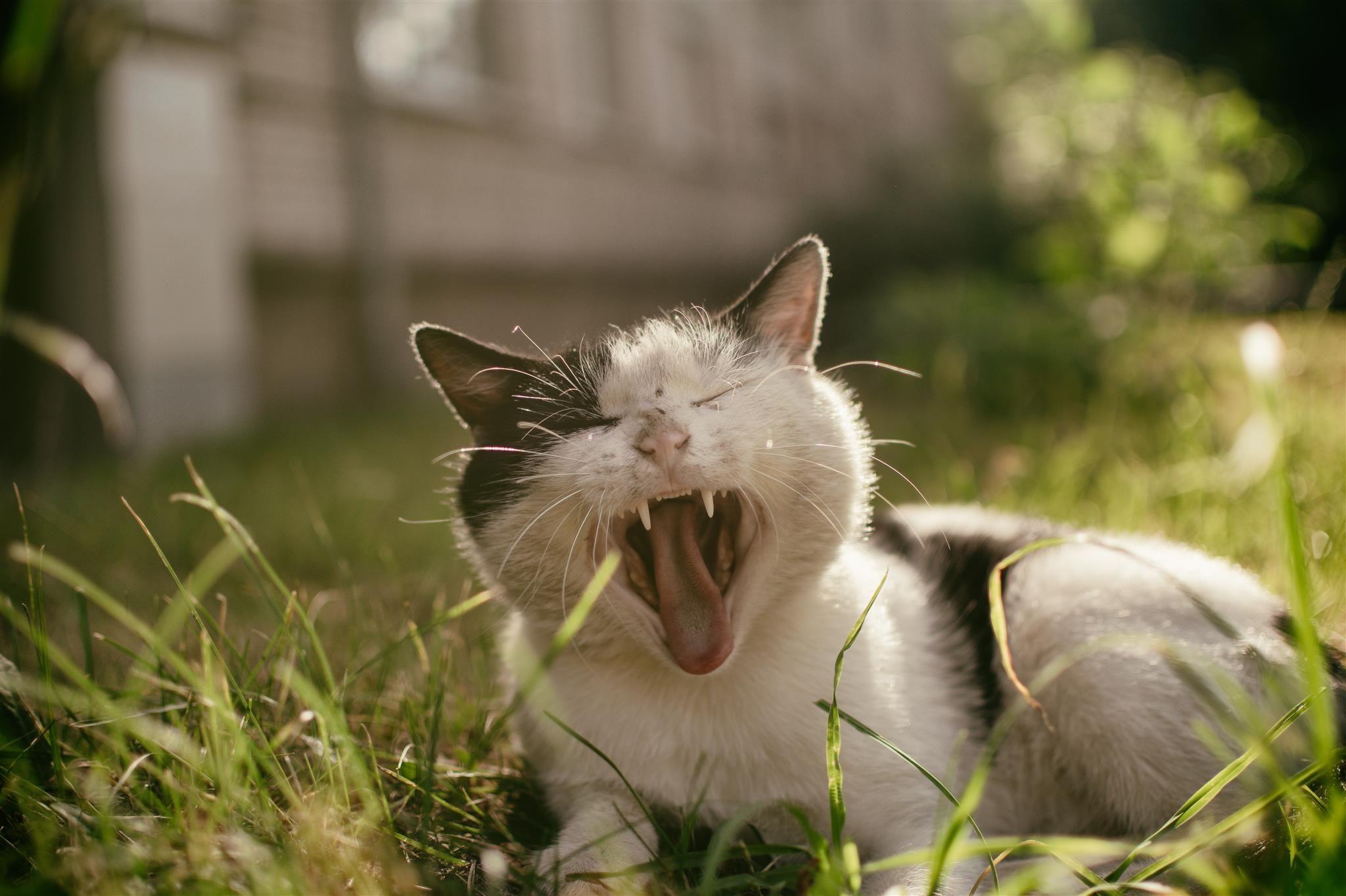 Soft kitty, warm kitty little ball of fur Happy kitty
