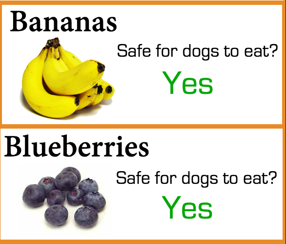 Symmetrical Art in 2020 Can dogs eat blueberries, Fruit