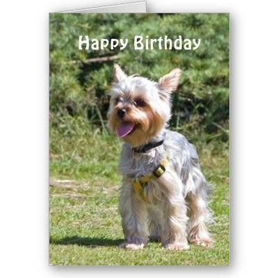 Yorkshire Terrier Dog Custom Birthday Card Zazzle Com Yorkshire Terrier Dog Yorkshire Terrier Yorkie Lovers