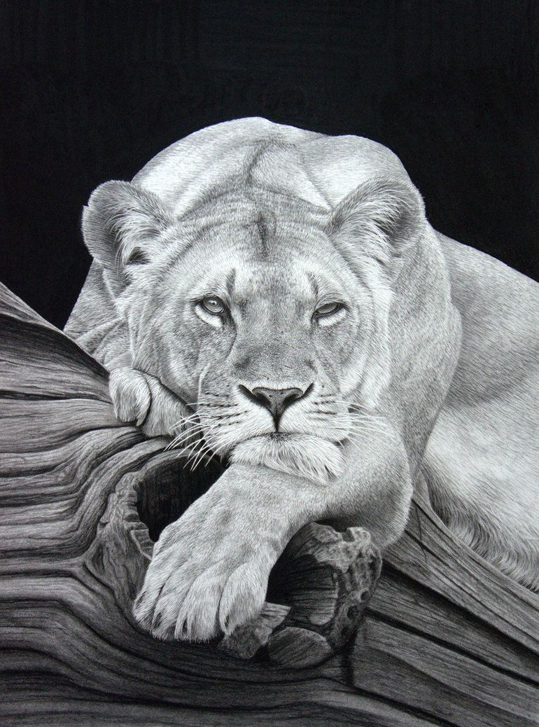 Daydreaming pencil on paper by stephenainsworth on deviantart hard drawings realistic animal drawings