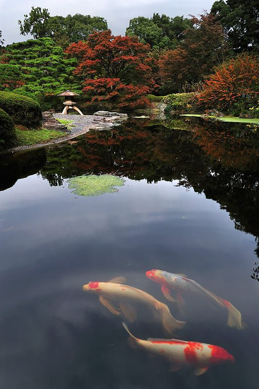 Imperial Palace Garden, 皇居庭園 Tokyo